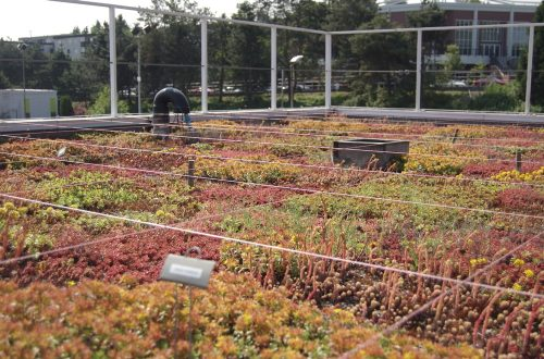 sample-1 - green roof installation in brooklyn