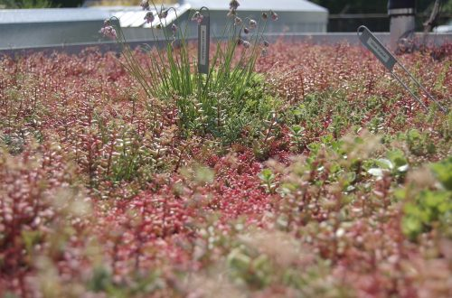 sample-4 green roof installation in brooklyn