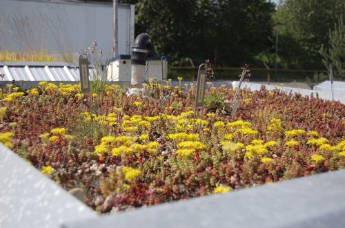 sample-5 green roof installation in brooklyn
