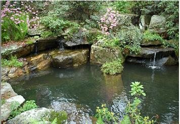 Backyard pond design NY