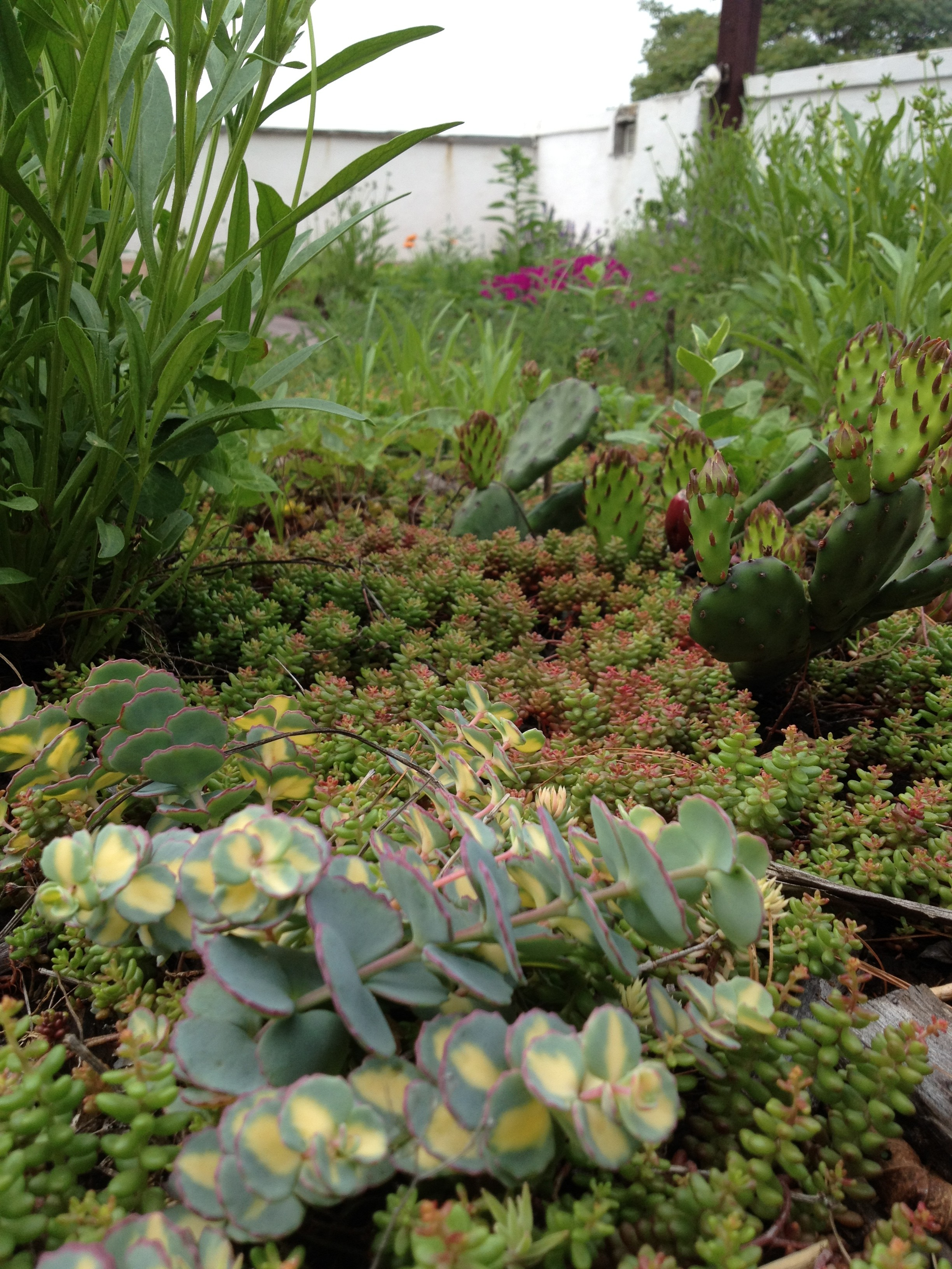 Native Plant Green Roof Installation