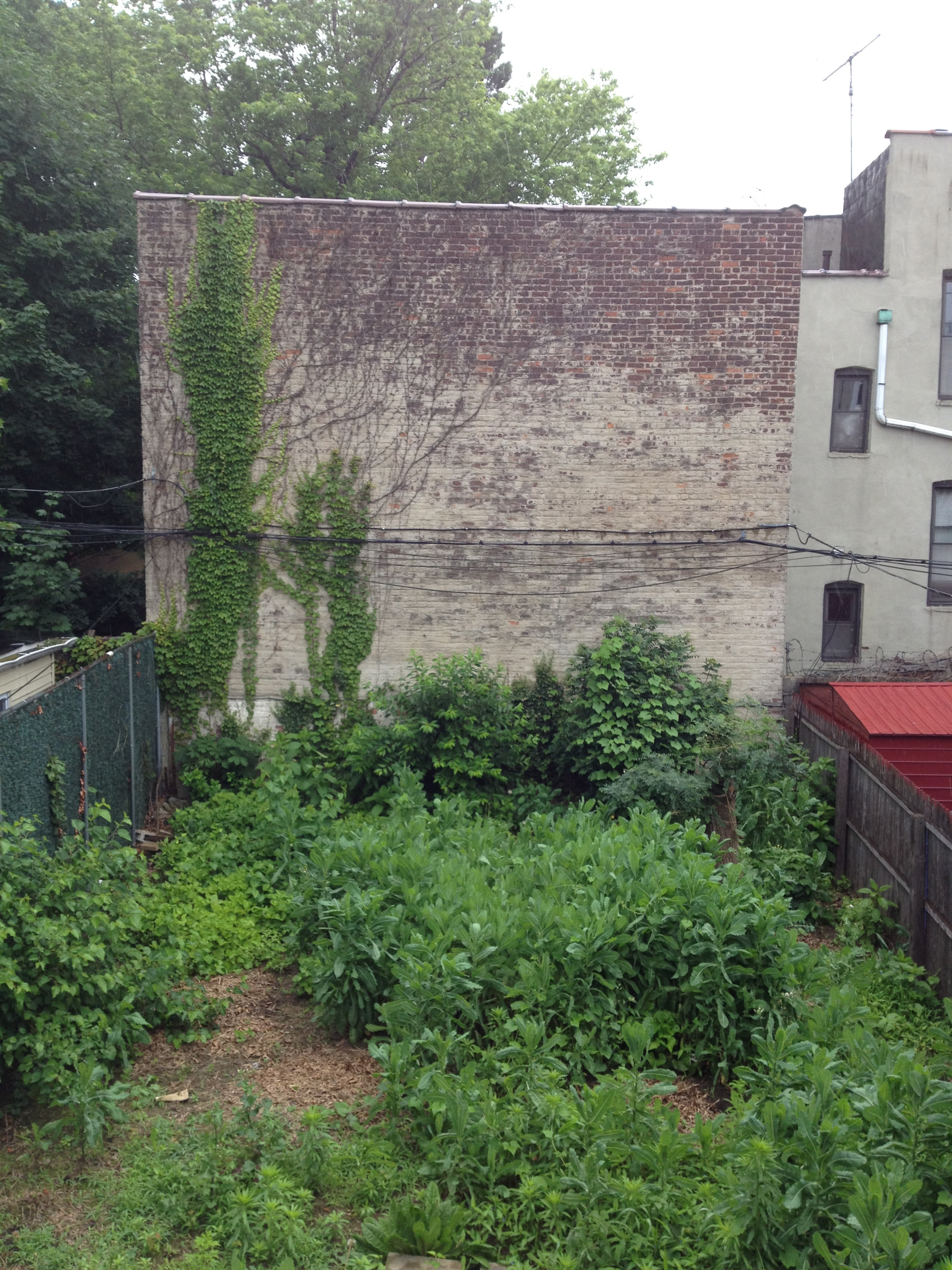 brooklyn s baggage soil contamination in our own backyards eco