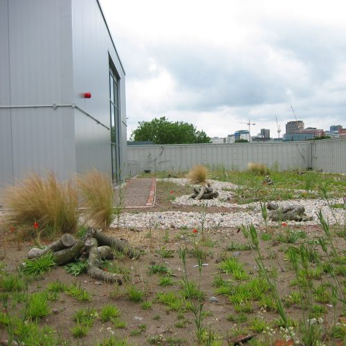 ny green roof builder