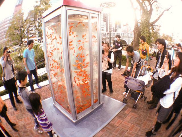Phone Booth Aquarium Eco Brooklyn