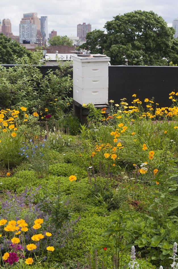 Eco Brooklyn Green Roof and Bee Hive