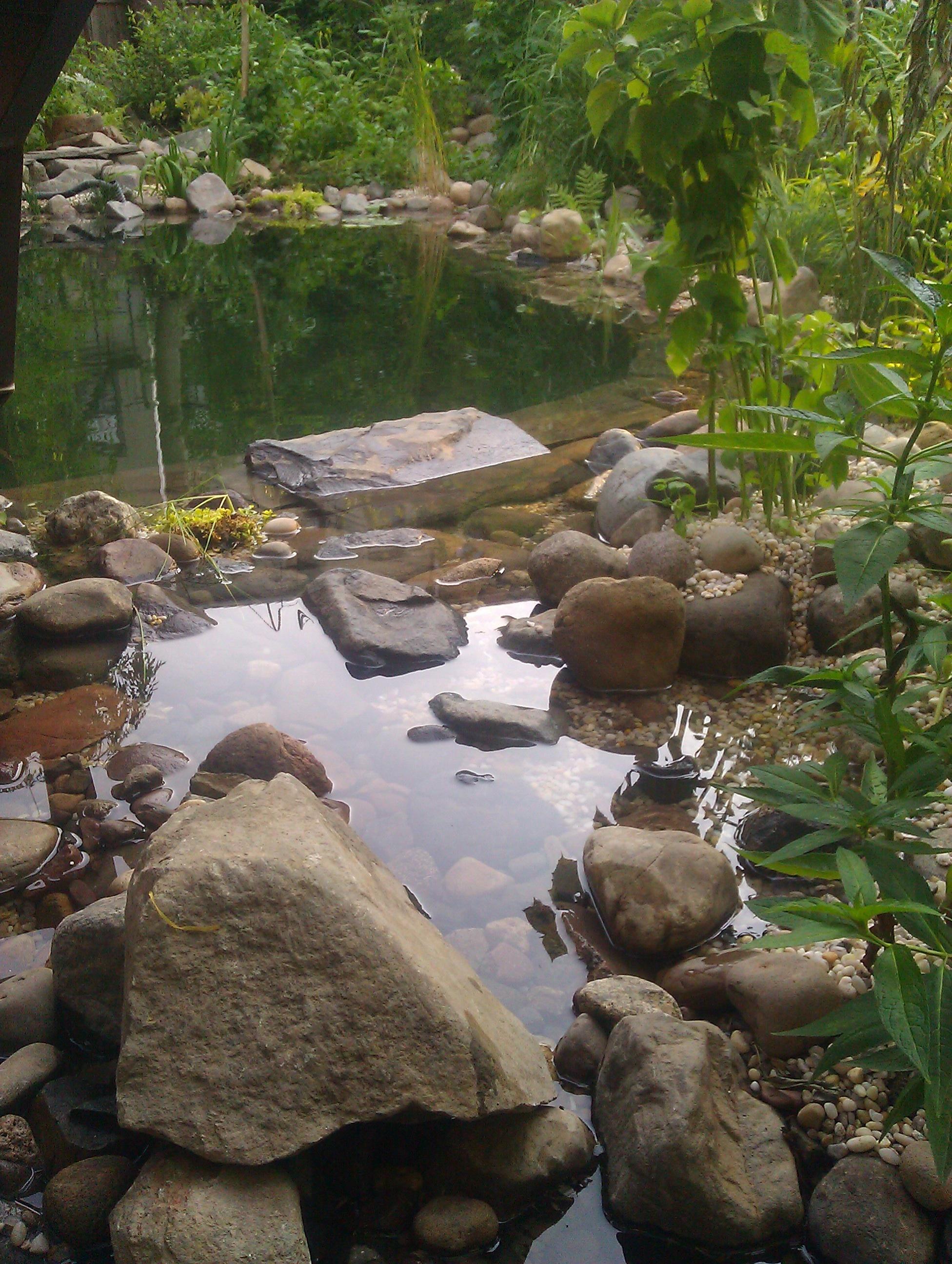 Natural swimming pool builder eco brooklyn Natural swimming pool builders