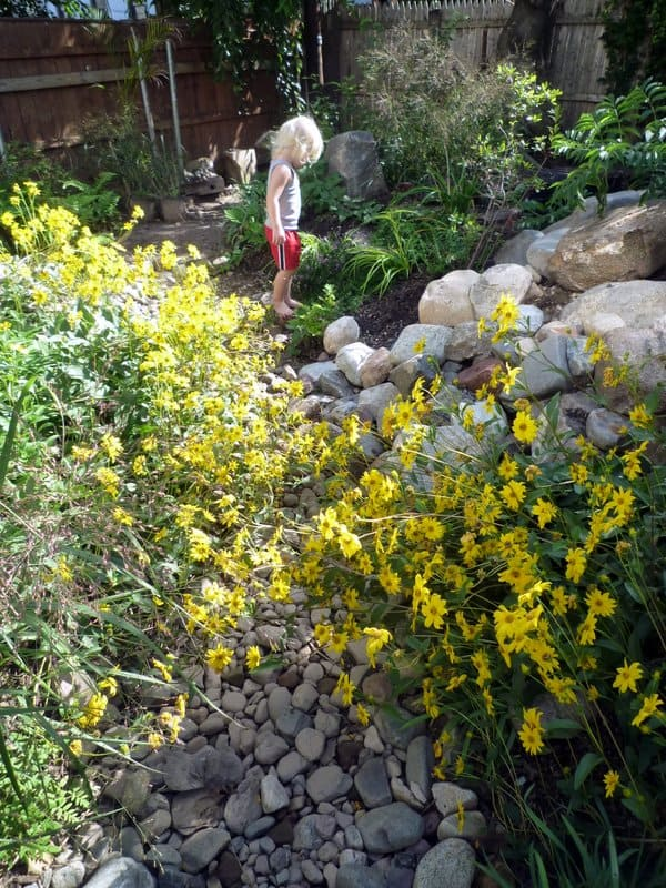 My son exploring our native garden designed with inspiration from the book Manahatta
