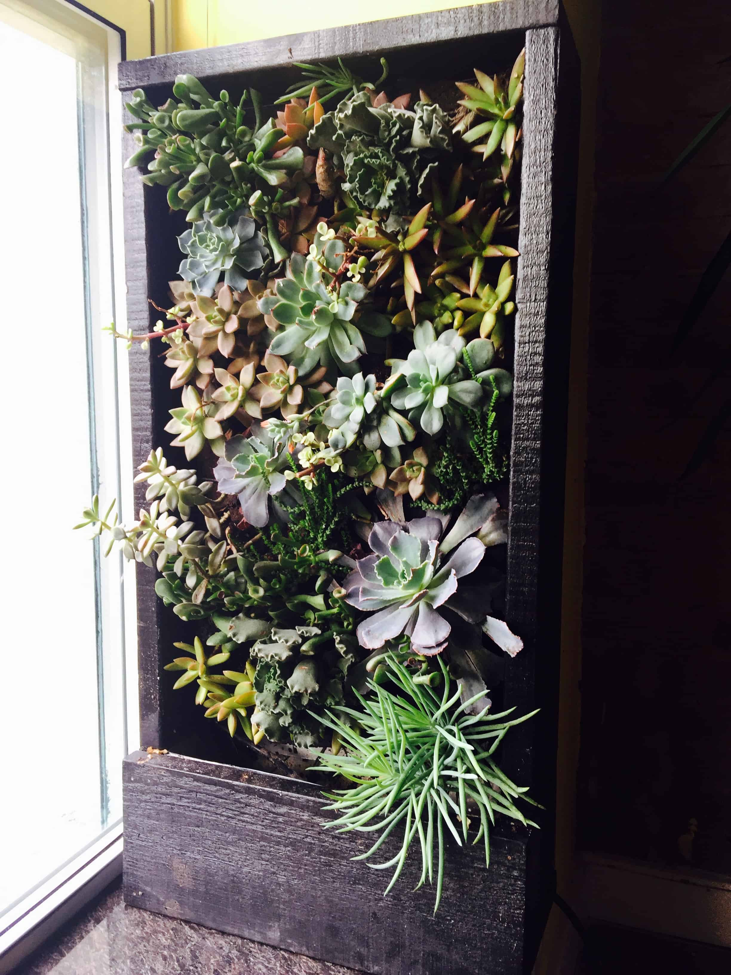 informal green wall indoors. We Made This Cute Little Living Wall Prototype Out Of Succulent Plants. Cute, Right? Well, Here\u0027s A Secret: Most Walls Are Photographed At The Informal Green Indoors 0