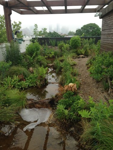 River on a Brooklyn Green roof.
