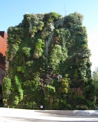 Living walls may not be able to have redwoods, but it definitely can have small bushes.