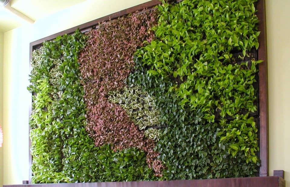 Green wall archives eco brooklyn for Living plant walls
