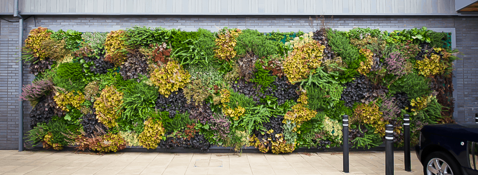 Captivating Green Wall Benefits