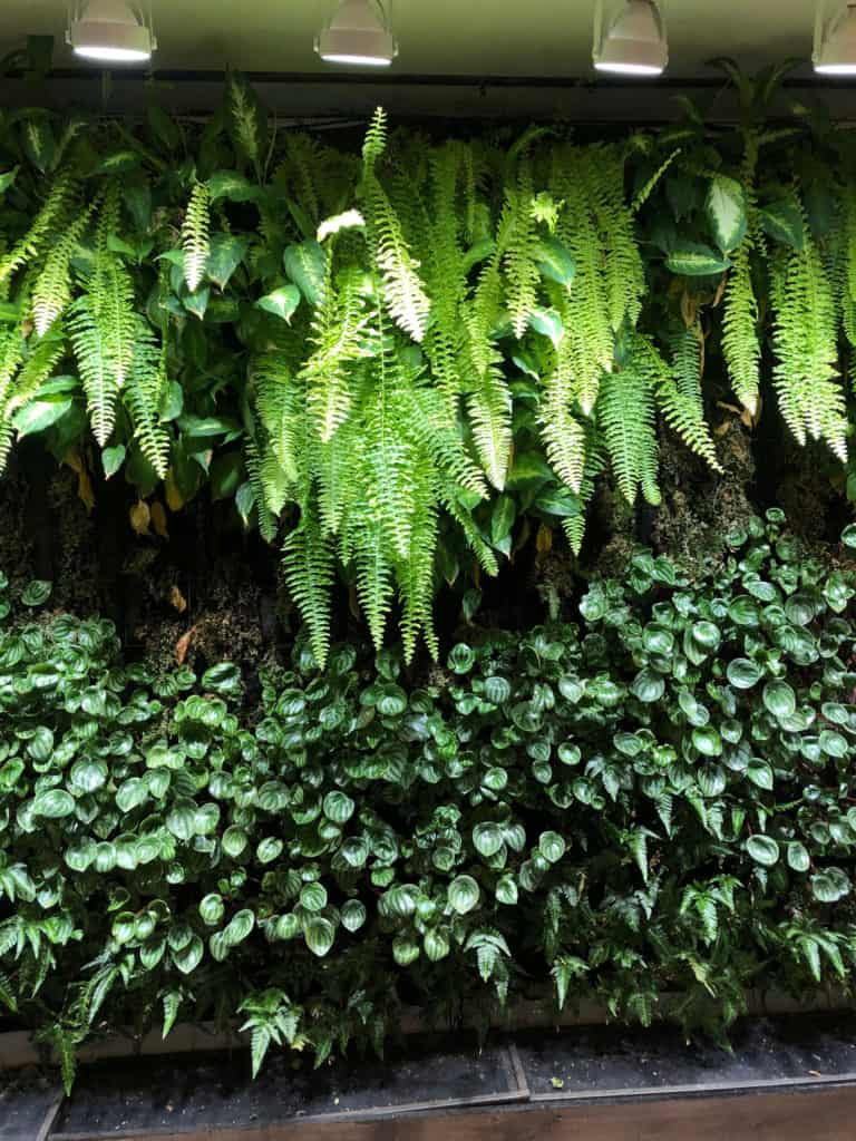 Why We Don U0026 39 T Do Moss Wall Installations